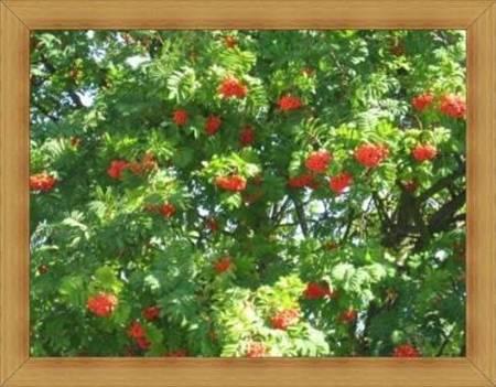 Przyrodnicze atrakcje Olsztyn wczasy jesienią