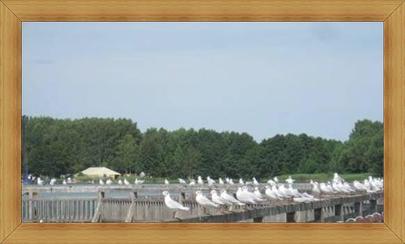 Jeziora Olsztyn atrakcje ptaki na molo