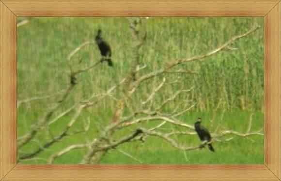 Kormorany Olsztyn jeziora ptaki Warmia i Mazury