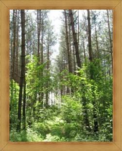 Warmia i Mazury lasy Olsztyn atrakcje przyrodnicze