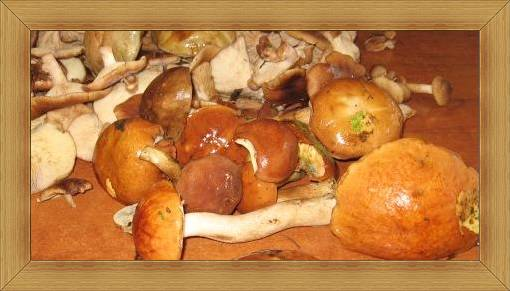 Grzybobranie Hotel Olsztyn SAK lasy sosnowe z grzybami