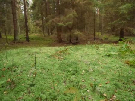 Atrakcyjne miejsca w Olsztynie i okolicy las