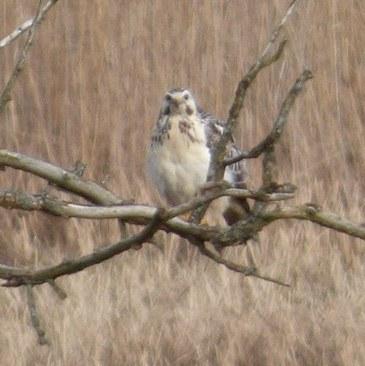 Ptaki Drapieżne koło Olsztyna