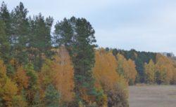 Barwy Jesieni Przedmieście Olsztyna