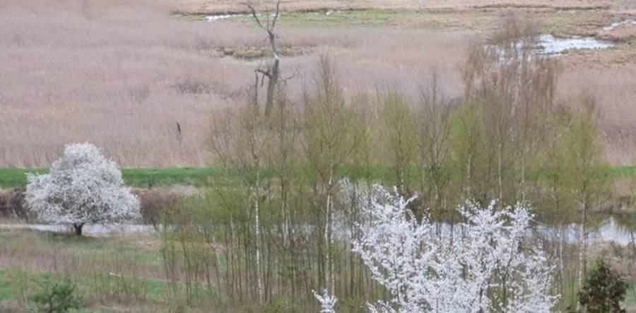 Kwitnące krzewy Nad Łyną