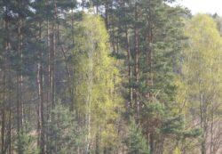 Olsztyn Wiosna w Lesie